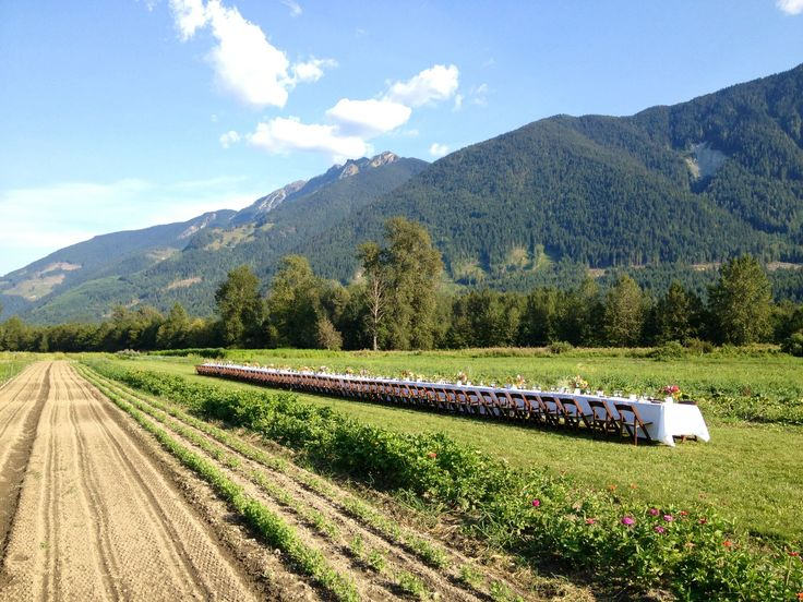 Harvest Table, North Arm Farm Wedding Pemberton BC. Whistler Cooks Catering. Outdoors, field, rustic.