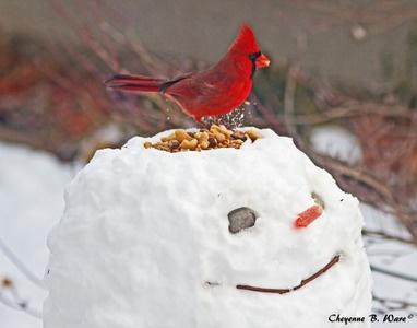"""Winter """"Bird Feeder"""""""