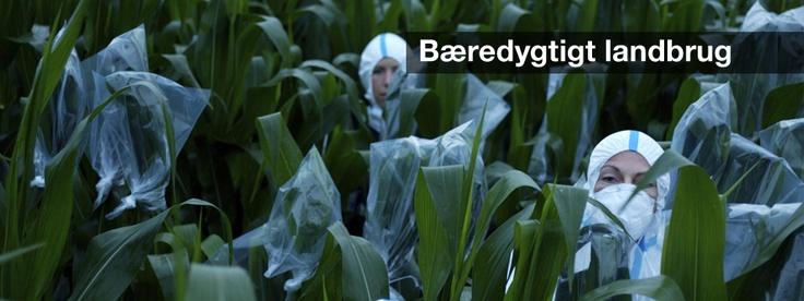 Bæredygtigt landbrug | Greenpeace Danmark