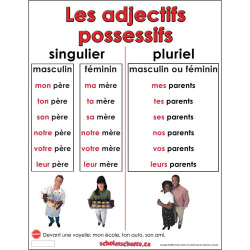 Les adjectifs possessifs.: