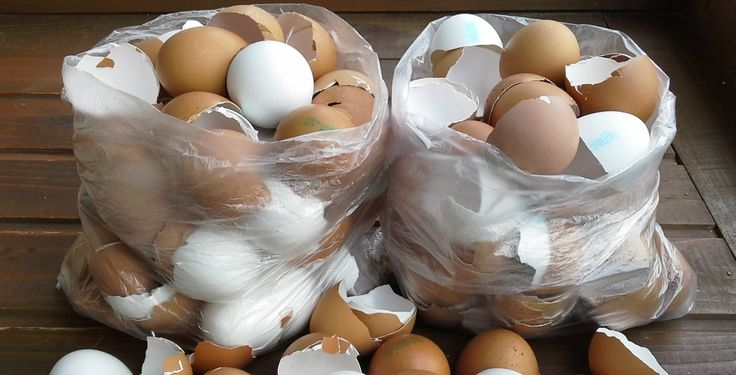 Napokig gyűjtögette a tojáshéjat, mindet az utolsó kis darabig eltette. Majd egy olyan csodálatos dolgot készített belőle, amire minden szomszéd rácsodálkozott!