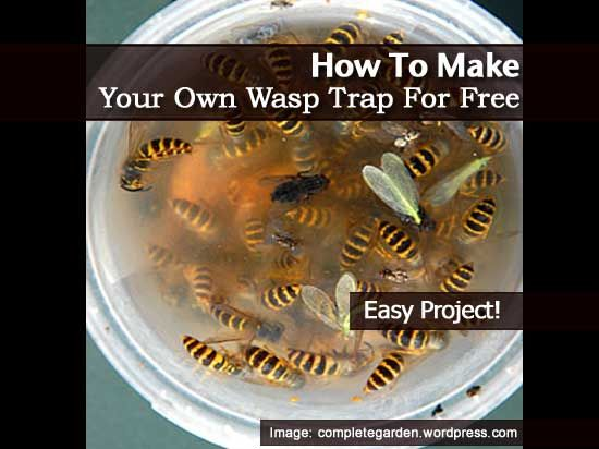 Not only can the potential of wasp stings be frightening but they can be very detrimental to outdoor activities due to their attraction to food and beverages being outside. Luckily, a DIY wasp trap is very easy and cost effective to make. With a few basic ingredients and a modified soda bottle, you can enjoy …