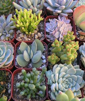 Spring Greening: The Easiest Way To Create An Apartment GardenPlanting Succulents, Spring Gardens, Green Thumb, Spring Green, Heart Succulents, Succulent Plants, Apartments Gardens, Gardens Refinery29, Create