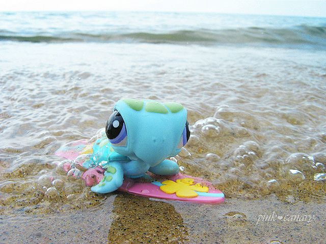 Littlest Pet Shop Turtle Surfing!!!!! This is so awesome I am so taking a pic. Like this next time we go to the beach!!!!!!!