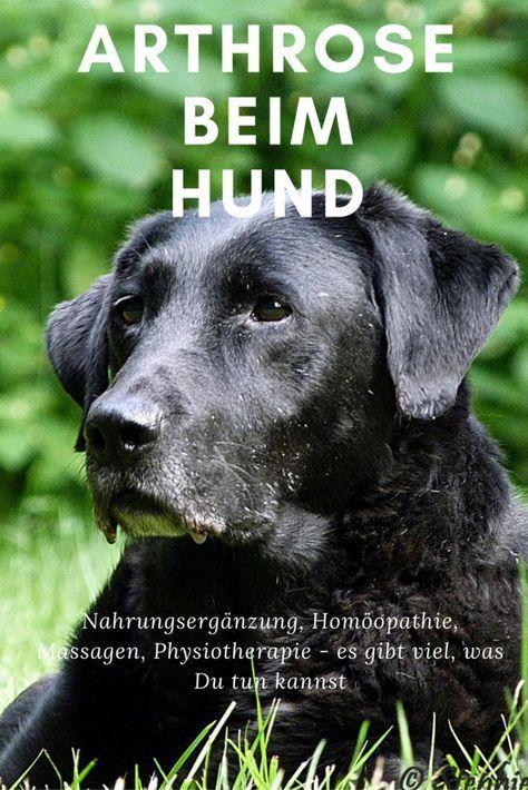 Welche Behandlung beim Hund mit Arthrose ist möglich?   thepellmellpack.com