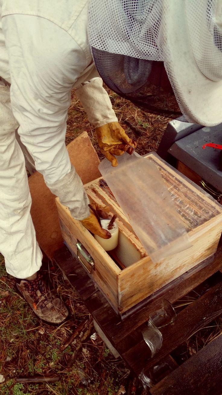 Kathleen beim Kontrollieren der Bienenkästen und der Zufütterung von Honig im März - Fräulein W.