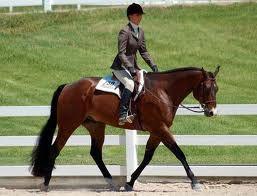 Il termine equitazione indica l'utilizzo sportivo del cavallo da parte dell'uomo