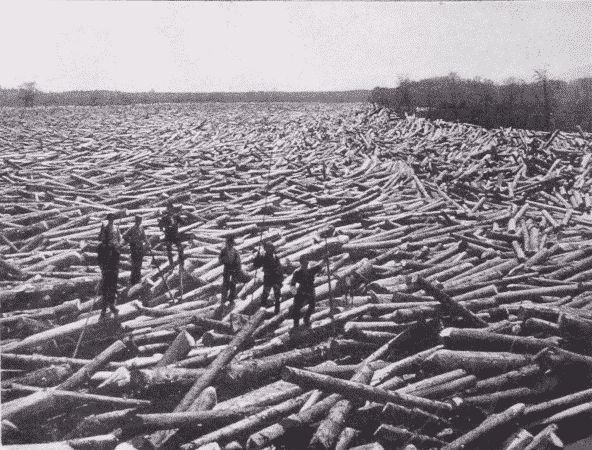 'Log Raft'......an endless supply of cut trees!