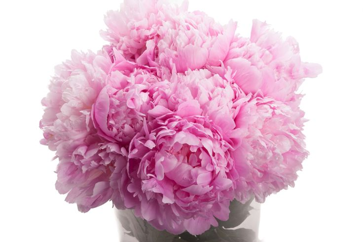Den matek v barvě Světle Růžové pivoňky | Flower Muse