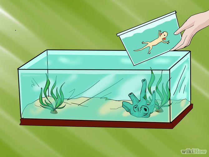 House a Pet Axolotl Step 8.jpg