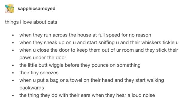 This succinct, but not exhaustive list: | 21 Tumblr Posts That Perfectly Summarise Owning A Cat