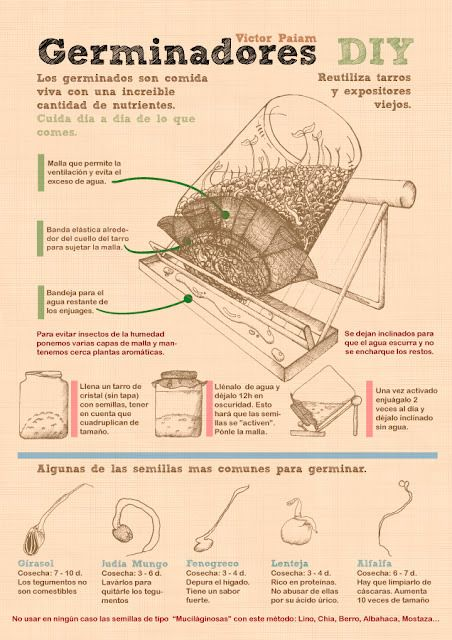 Infograf_a_Germinador_victorpaiam_gmail.com