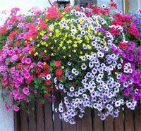 balcone fiori200 Fiori per il balcone al sole e allombra