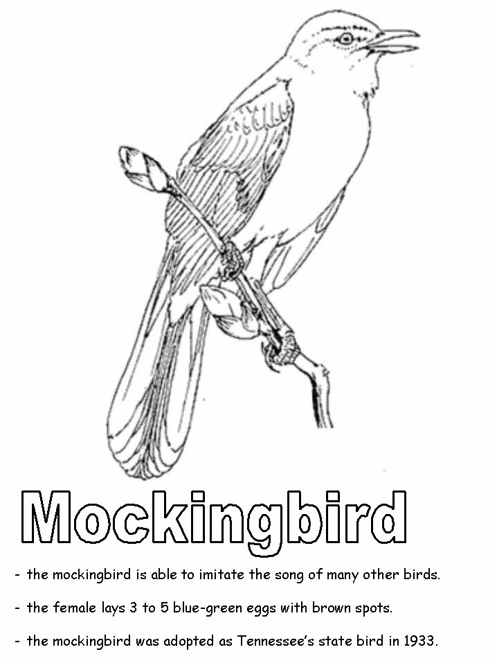 Tennessee State Bird: Mockingbird coloring page