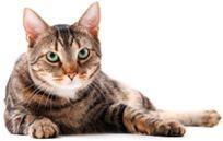 Comment se comporte votre chat avec son bol de nourriture et son bol d'eau? - Mondou