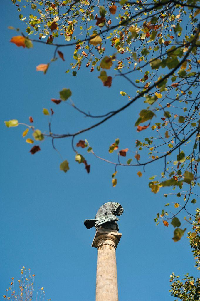 Rotunda da Boavista in autumn