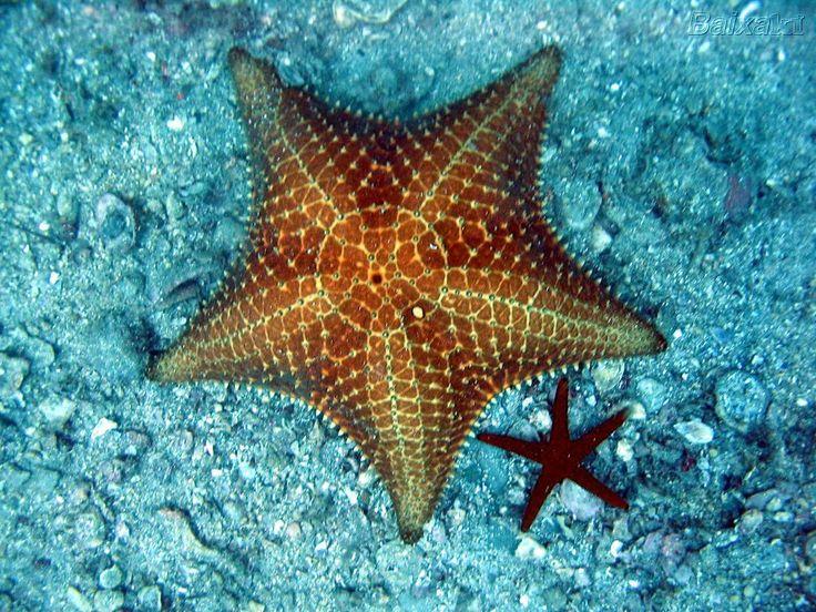 Atirando estrelas ao mar . Leia.