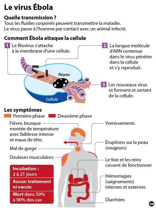 Guinée : l'épidémie de fièvre Ebola a atteint la capitale Conakry - La Parisienne