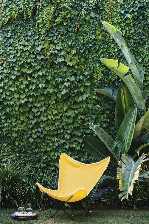 Climber, Screen, Garden Wall. Modern garden inspiration. Midcentury modern chair - don't you want to sit and relax there?
