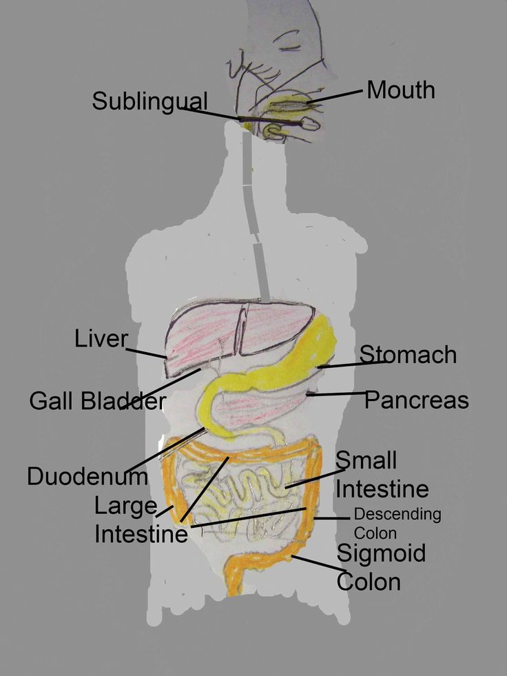 Anatomy Of A Combine : Digestive system food combining n ph pinterest