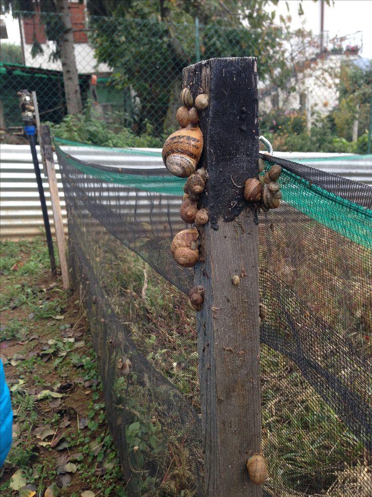 Allevamento di lumache. Cheluma Almenno San Salvatore Bergamo