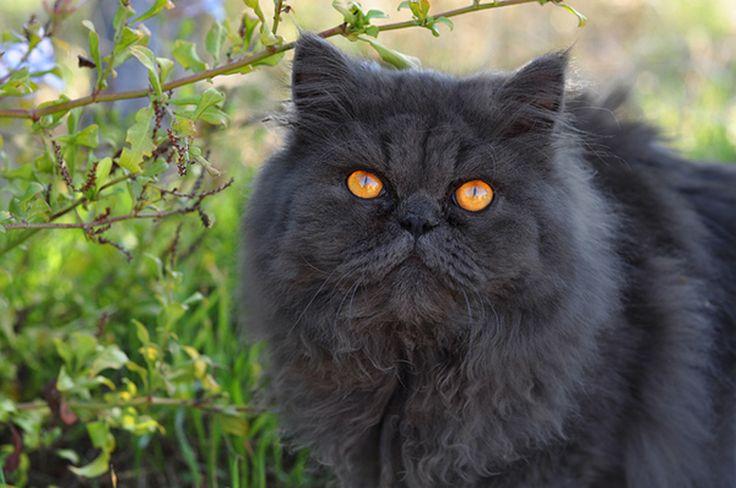 Medicane Cat Warriors