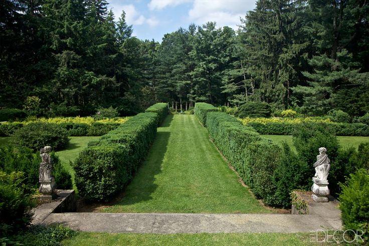 Best 25 American Boxwood Ideas On Pinterest Stone Retaining Wall Hedges Landscaping And