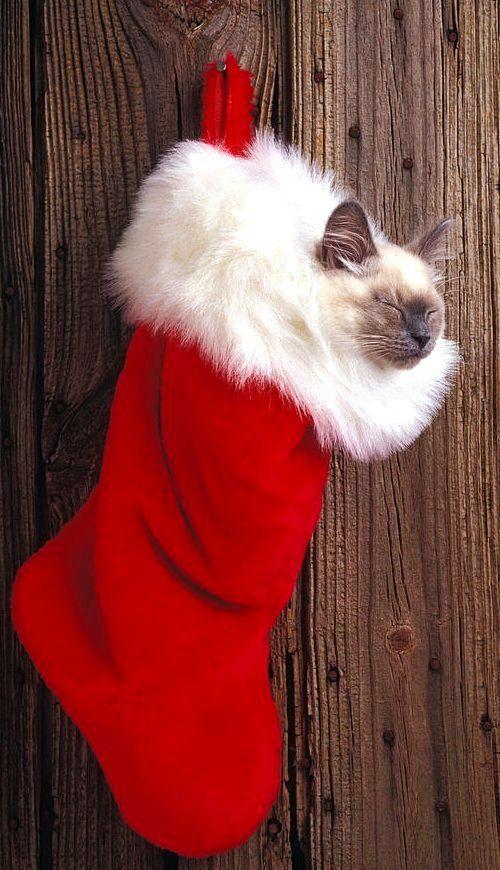 Kitten In Stocking.. | by Garry Gay