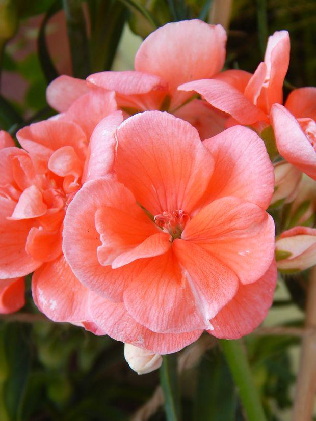 Λουλούδια: ζωντανές ομορφιές