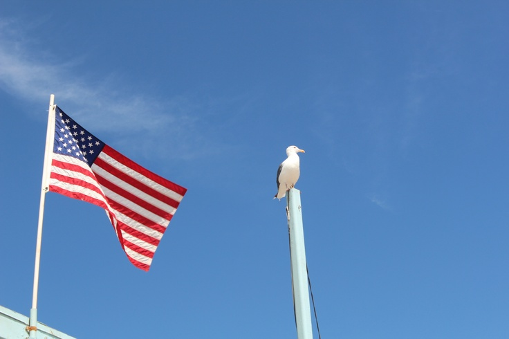 A national flag and gull