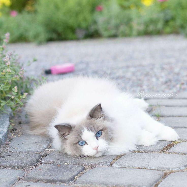 Aurora the Cat is a True Sleeping Beauty
