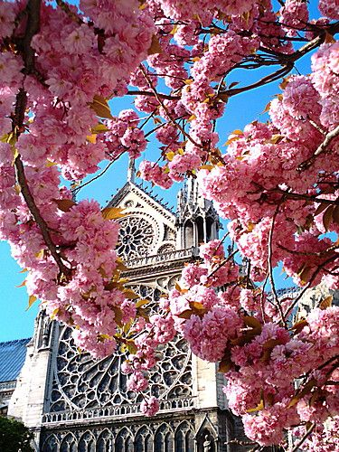 Notre Dame Cathedral, Paris. I was thinking a nice palette of pink, blue, and cream :)