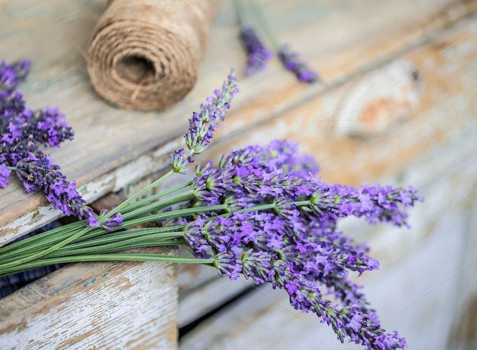 Bunch of lavender flowers by Grafvision photography on @creativemarket