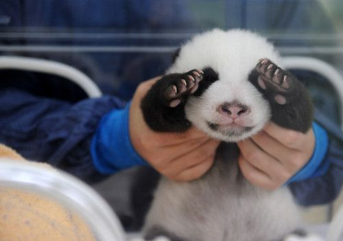 panda.  can't handle the cuteness.  we need to get an oec mascot.  it can live with jbass clearly.