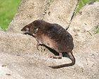 ssaki polski - wykaz na wikipedii