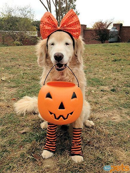 Orange you in the trick-or-treat spirit! Give me a Y-E-S!