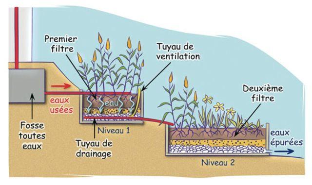 phyto-épuration-schéma1                                                                                                                                                                                 Plus