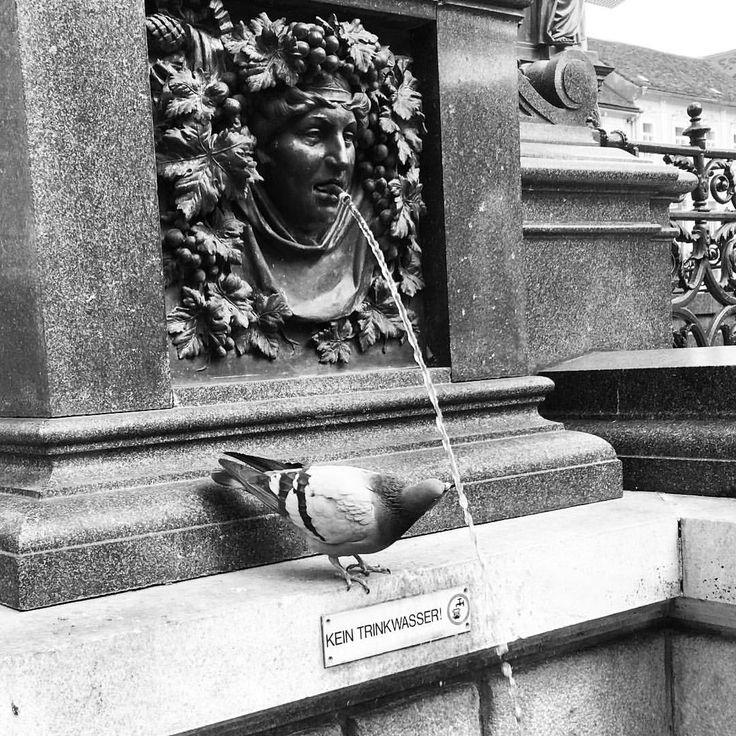 """363 kedvelés, 19 hozzászólás – AndrewBarasits (@andrewbarasits) Instagram-hozzászólása: """"#kein #trinkwasser #silly #dove #drink #fountain #water #statue #bnwhungary #bnw #blackandwhite…"""""""