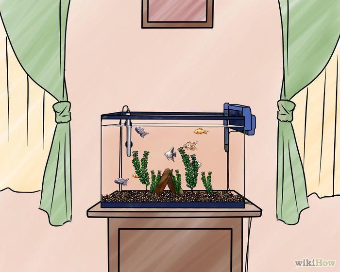 Jak založit sladkovodní akvárium