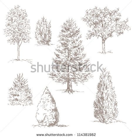 how to sketch realistic trees google search - Architecture Drawing Of Trees