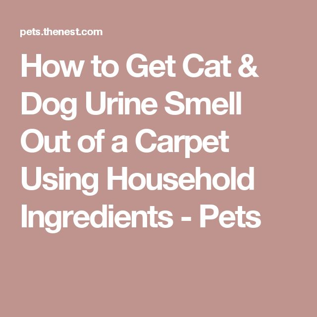 Dog Smell Of Rug: How To Get Cat & Dog Urine Smell Out Of A Carpet Using