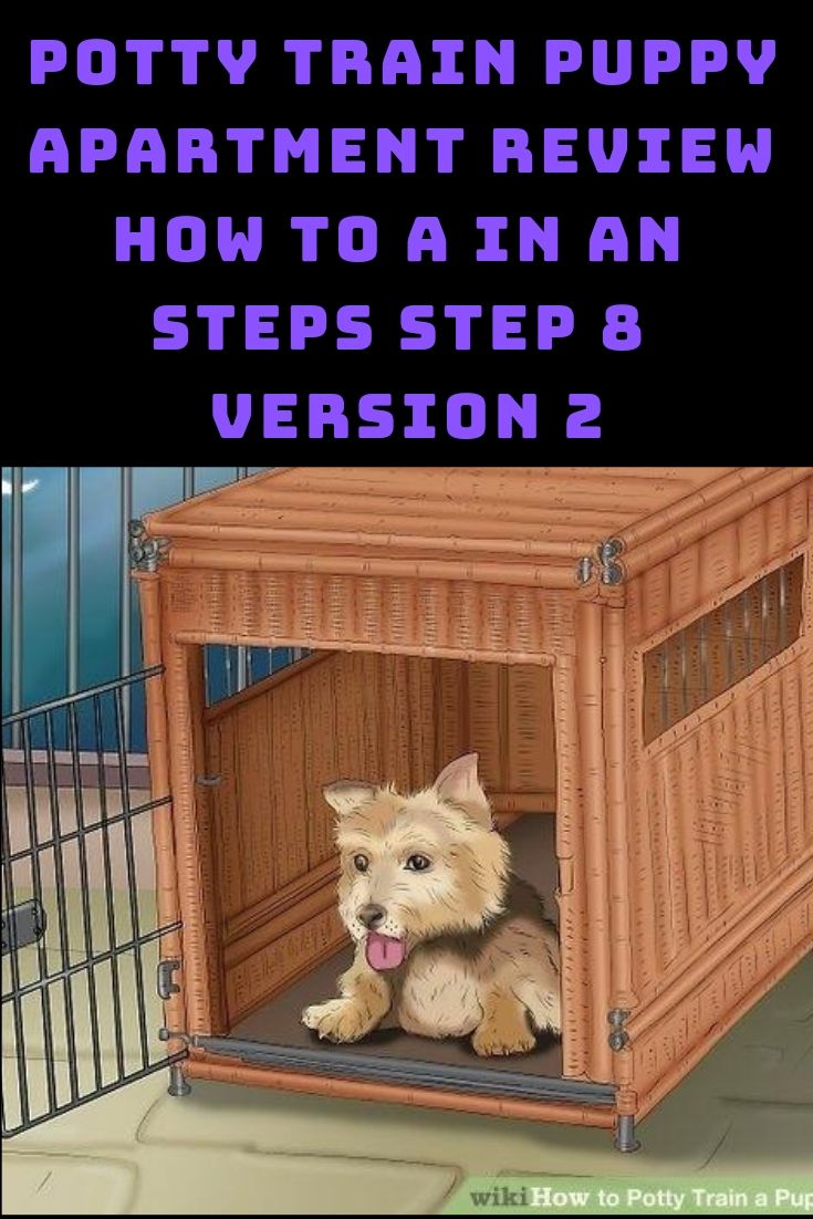 Potty Train Puppy Apartment Review How To A In An Steps Step 8
