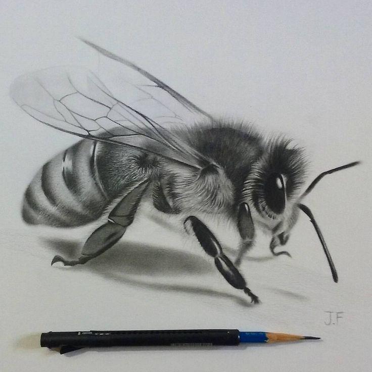 фотографиях пчелы в графике картинки слова