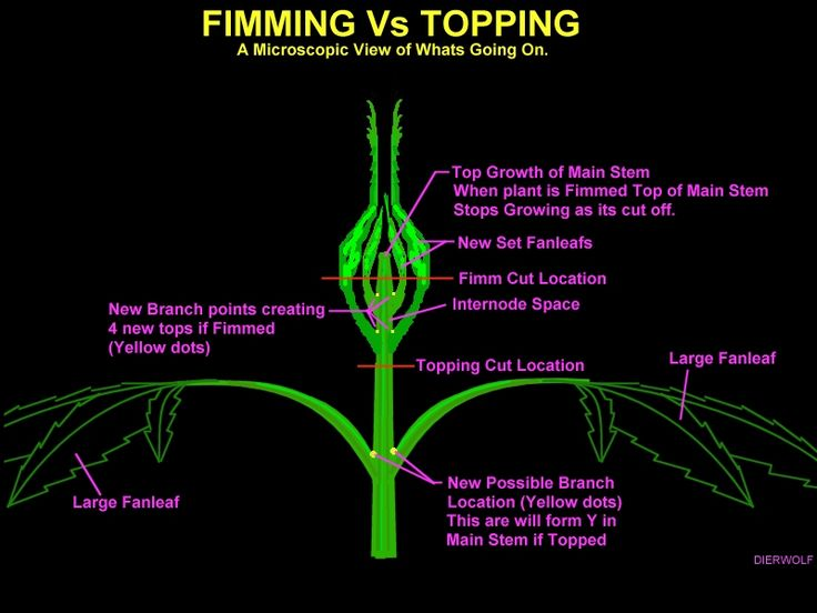 Detailed explanation of two marijuana growth control techniques that involve actually cutting the plant. Original link: http://cannabis.wikia.com/wiki/FIMing