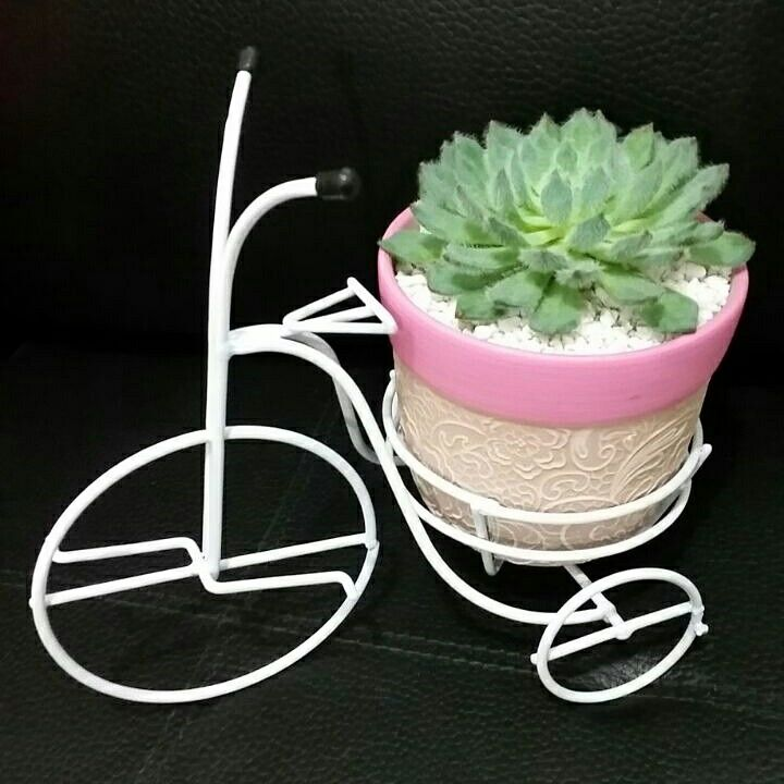 Succulent pot ideas. Ideas para macetas. Suculentas