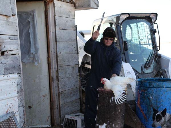 The Hutterites Wesley Hofer butchering a chicken.