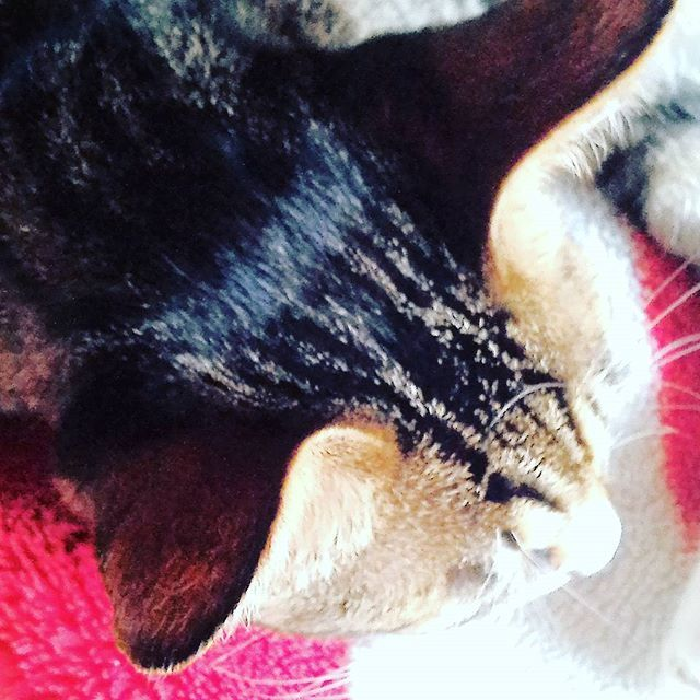 頭頂部 #cat