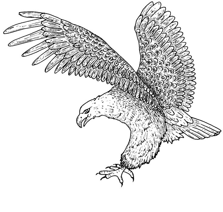 51 best Eagle Coloring Pages images on Pinterest Eagle Adult