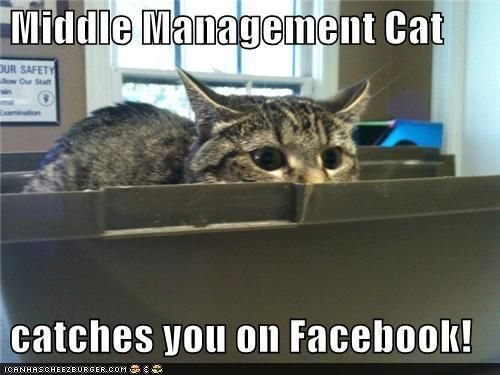 Funny Cat Meme About Work : Best working cats images on pinterest kittens