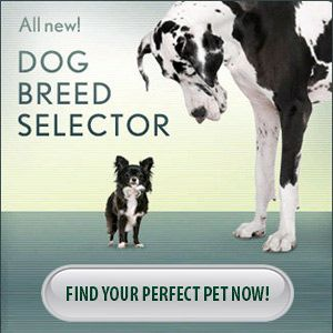 Breed Selector: find the perfect dog for your family/ http://animal.discovery.com/breed-selector/dog-breeds.html
